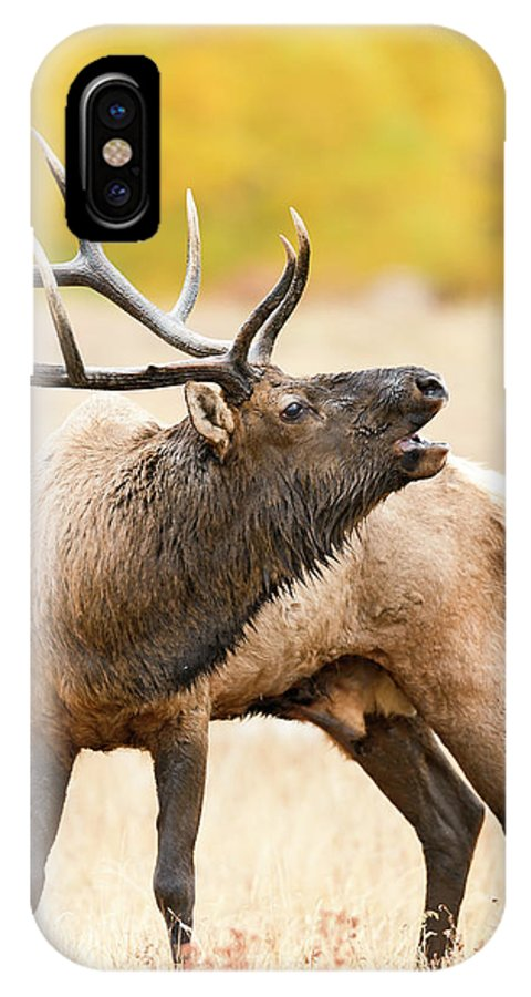 Bull Elk IPhone X Case featuring the photograph Bull Elk Bugling In The Fall by Gary Langley