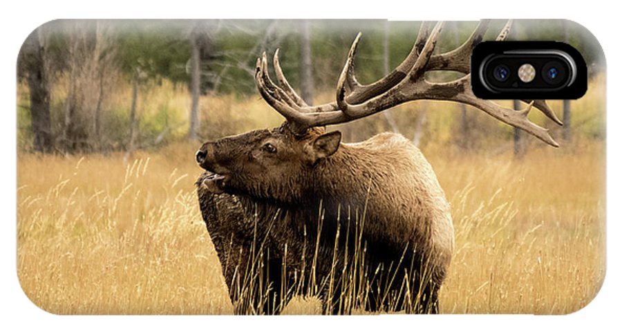 2017 IPhone X Case featuring the photograph Bull Elk Sideview by Kelly Kennon