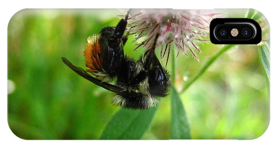 Bee IPhone X Case featuring the photograph Bumble Bee by Melissa Parks
