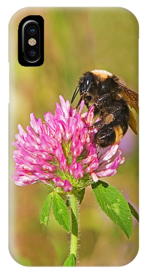 Bumble Bee IPhone X Case featuring the photograph Bumble Bee by Randall Ingalls