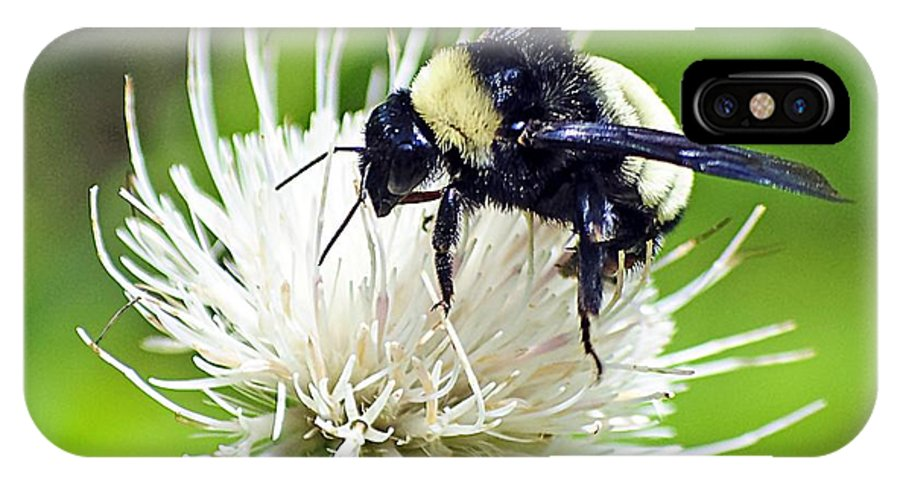 Bumblebee IPhone X Case featuring the photograph Bumblebee On Thistle Flower by Kenneth Albin