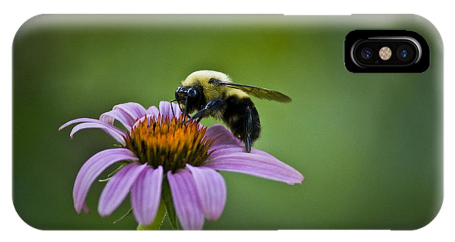 Bumblebee IPhone X Case featuring the photograph Bumblebee by Teresa Mucha