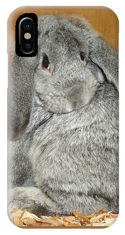 Bunny IPhone Case featuring the photograph Bunny by Gina De Gorna