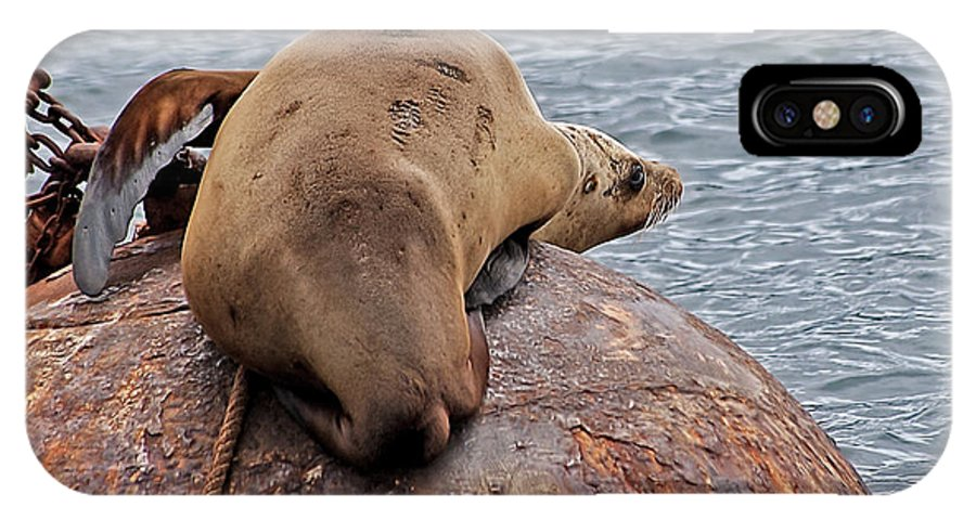 Sea Lion IPhone X / XS Case featuring the photograph Buoy Break by Jay Billings