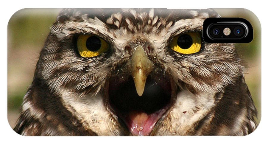 Owl IPhone X Case featuring the photograph Burrowing Owl Eye To Eye by Max Allen