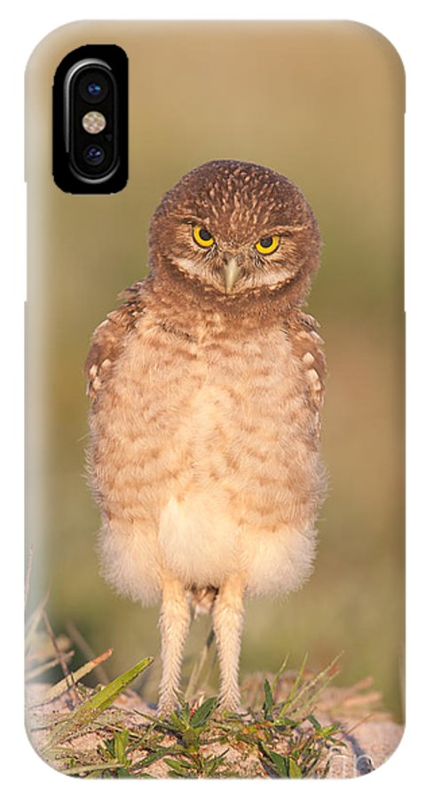 Clarence Holmes IPhone X Case featuring the photograph Burrowing Owl Fledgling I by Clarence Holmes