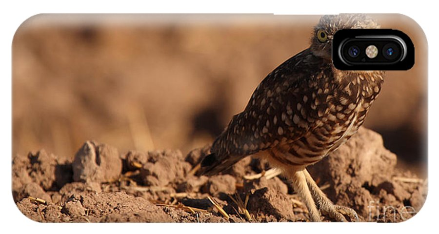 Owl IPhone X Case featuring the photograph Burrowing Owl Looking Back Over Shoulder by Max Allen