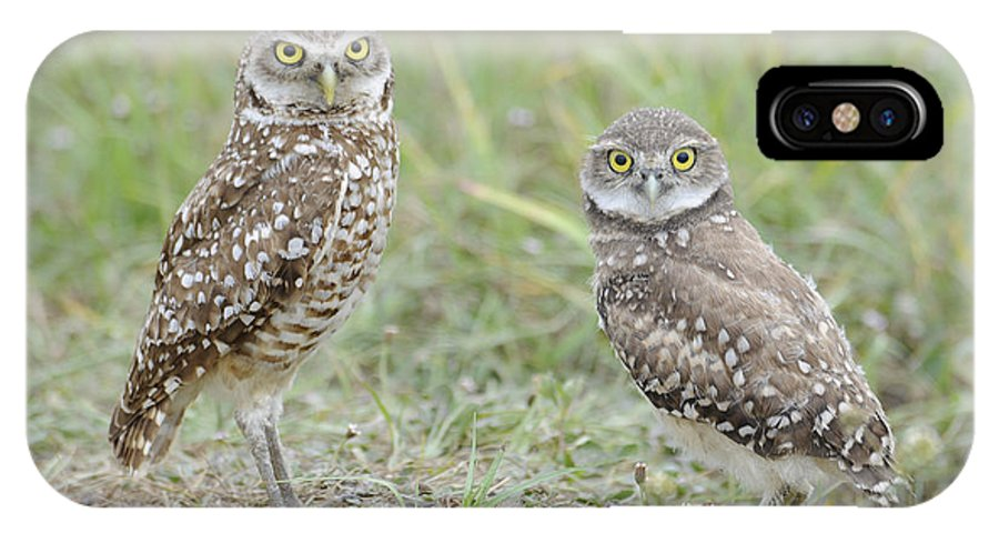 Burrowing Owl IPhone X Case featuring the photograph Burrowing Owls Nesting by Keith Lovejoy