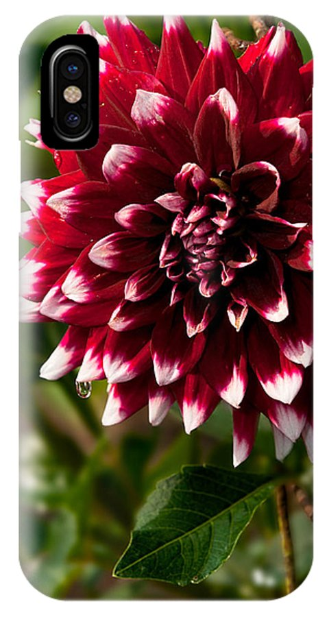 Flower IPhone X Case featuring the photograph Burst Of Red by Christopher Holmes