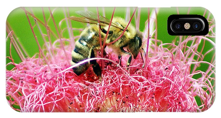 Nature IPhone X Case featuring the photograph Busy Bee by Holly Kempe