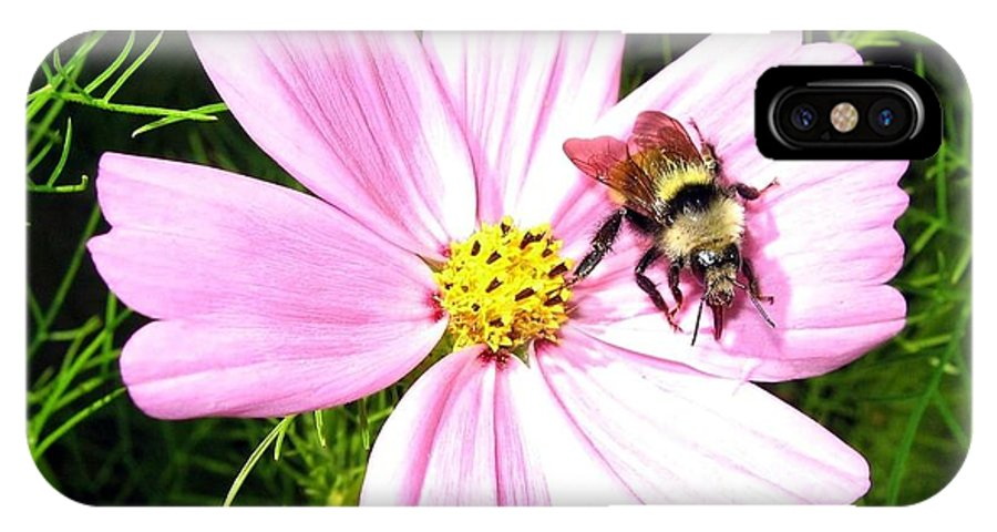 Bee IPhone X Case featuring the photograph Busy Bee by Will Borden
