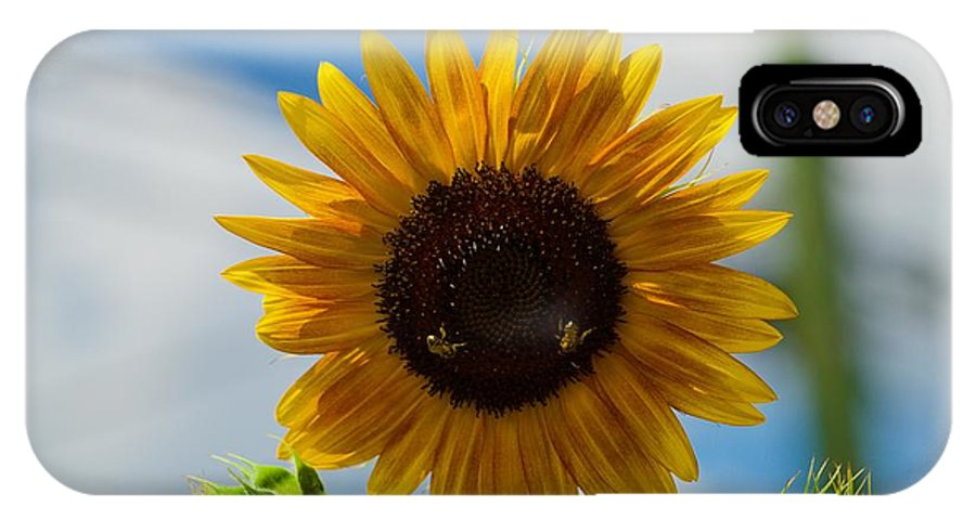 Bee IPhone X Case featuring the photograph Busy Bees by Jasmin Hrnjic