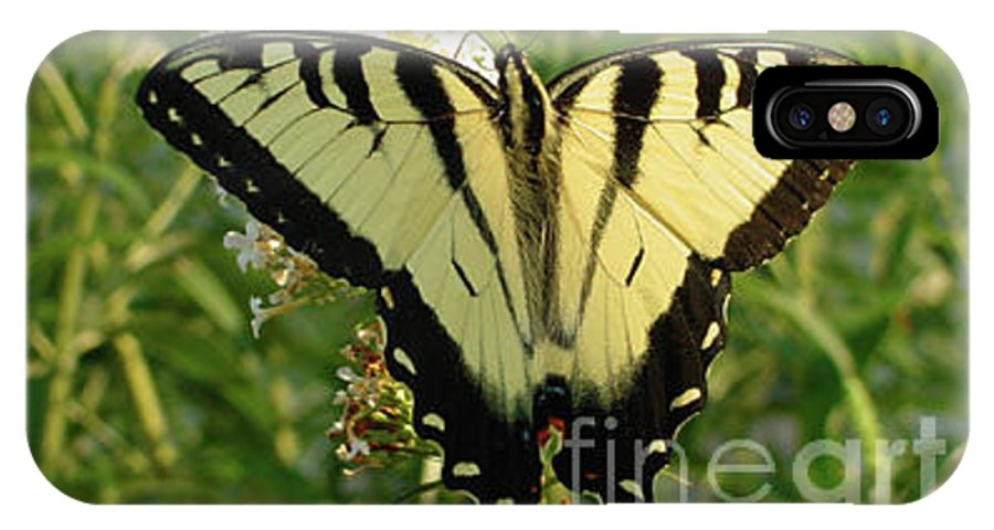 Yellow IPhone X Case featuring the photograph Butterfly 135 by Linda Seacord