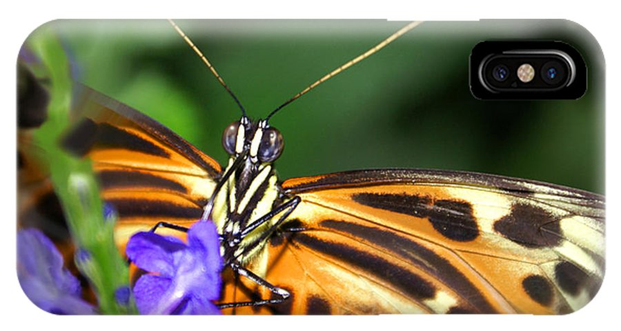 Butterfly IPhone X Case featuring the photograph Butterfly 2 eucides isabella by Heather Coen