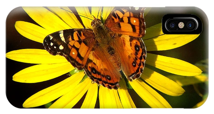 Nature IPhone X Case featuring the photograph Butterfly Bloom by Peg Urban