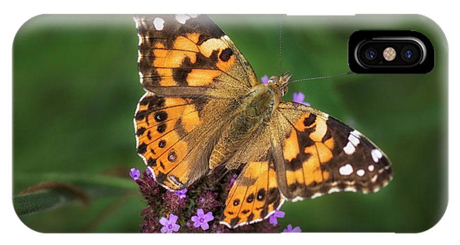 Painted Lady IPhone X Case featuring the photograph Butterfly by Claudia Kuhn