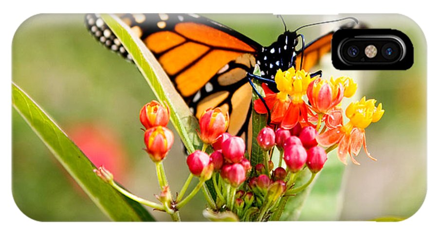 Butterfly IPhone X Case featuring the photograph Butterfly by Debbie Evans