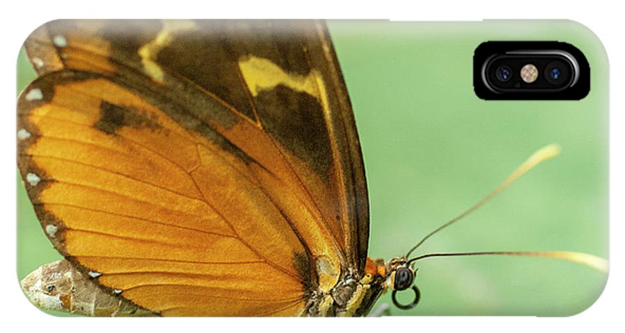 Heiko IPhone X Case featuring the photograph Butterfly Eueides Isabella by Heiko Koehrer-Wagner