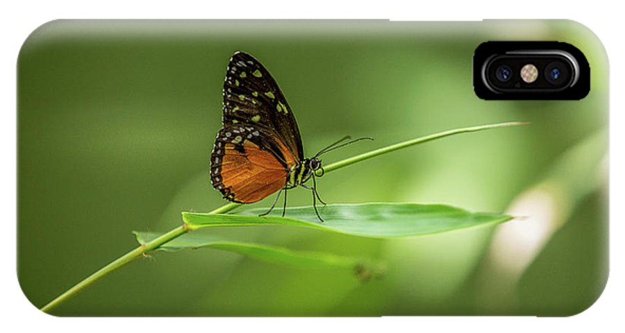 Butterfly IPhone X Case featuring the photograph Golden Helicon Butterfly by Jimmy Tran