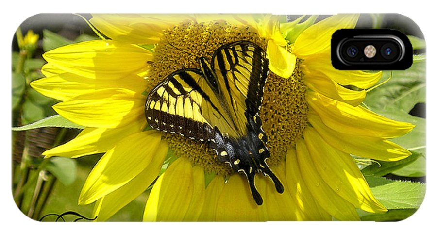 Monarch Butterfly IPhone X Case featuring the photograph Butterfly Monarch Ba by Dean Frick