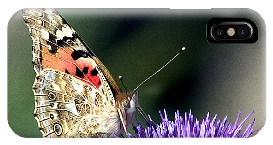 Butterfly IPhone X Case featuring the photograph butterfly on a Silybum marianum I by Nahum Budin
