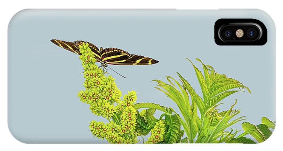 Animal IPhone X Case featuring the photograph Butterfly On Flower Cluster by Marv Vandehey