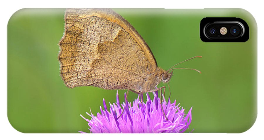 Meadow Brown Butterfly IPhone X Case featuring the photograph Butterfly On Knapweed by Genevieve Vallee
