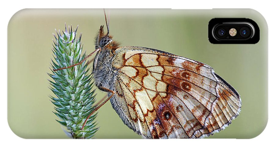 Insect IPhone X Case featuring the photograph Butterfly On The Grass by Michal Boubin