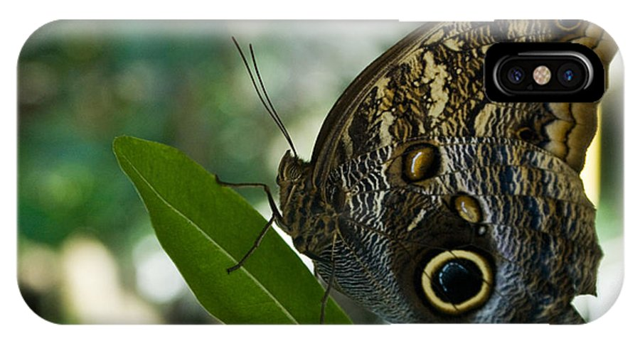 Butterfly IPhone X Case featuring the photograph Butterfly Sitting by Douglas Barnett