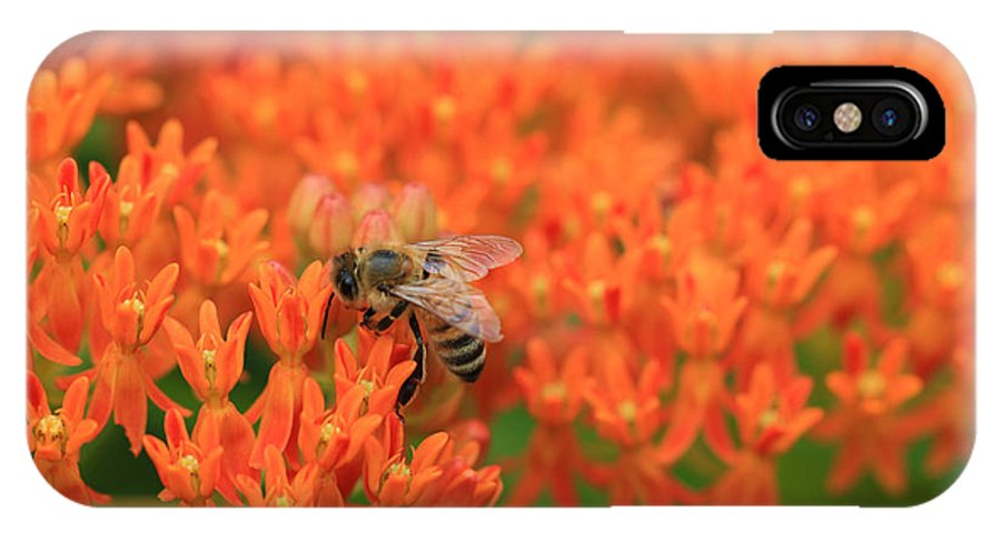 Butterfly Weed IPhone X / XS Case featuring the photograph Butterfly Weed Heaven by Rachel Cohen