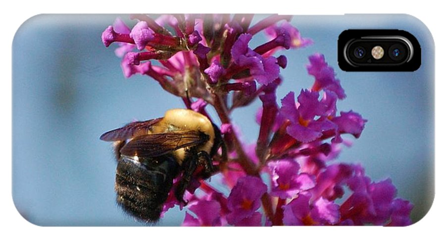 Bee IPhone X Case featuring the photograph Buzzed by Debbi Granruth