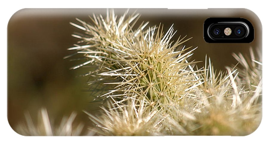Cactus IPhone Case featuring the photograph Cacti by Nadine Rippelmeyer