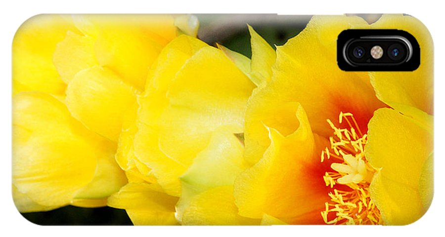 Everett Spruill IPhone X / XS Case featuring the photograph Cactus Bloom 1 by Everett Spruill