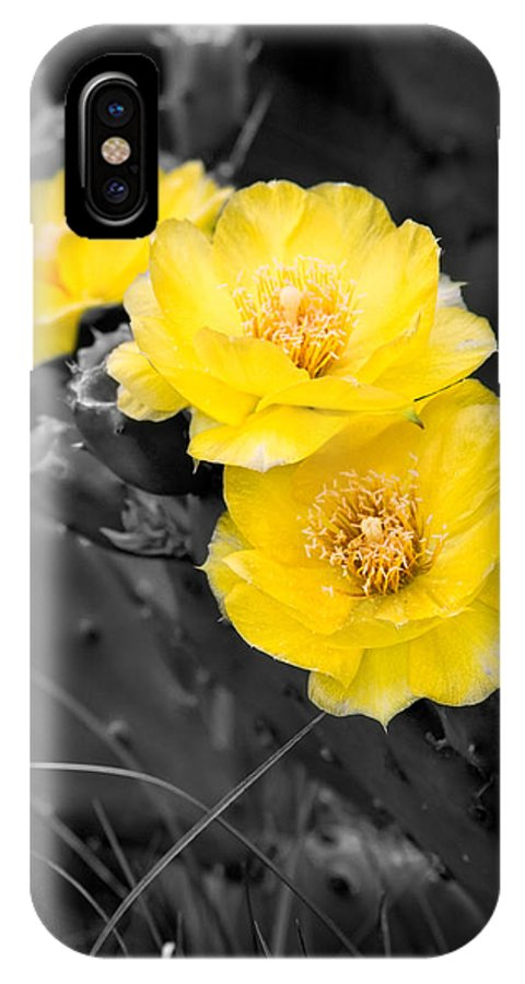 Cactus IPhone Case featuring the photograph Cactus Blossom by Christopher Holmes