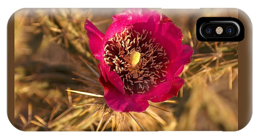 Cactus Flowers Wildflowers IPhone X Case featuring the photograph Cactus Flower 1 by Tim McCarthy