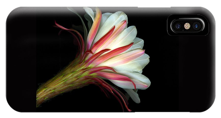 Scanart IPhone X Case featuring the photograph Cactus Flower by Christian Slanec
