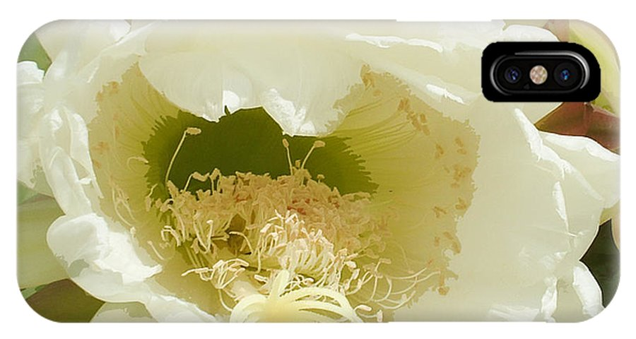 Flower IPhone X Case featuring the photograph Cactus Flower by Vicky Brago-Mitchell