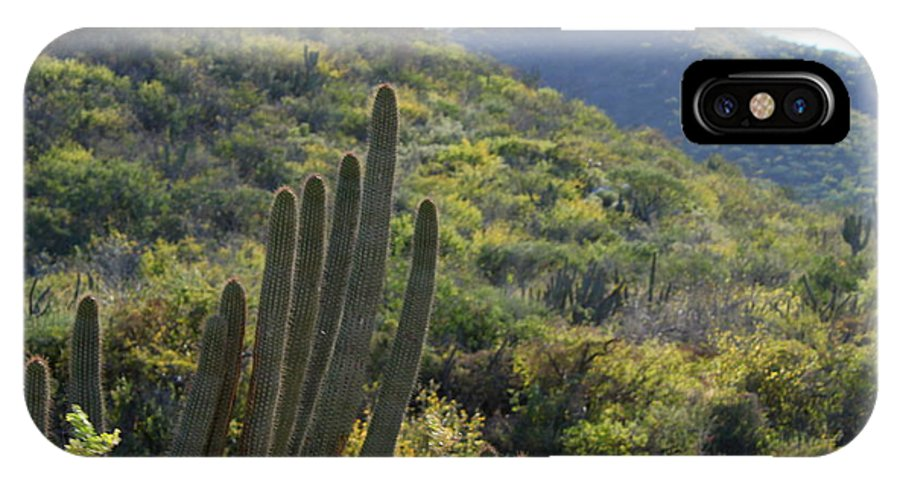 Cactus IPhone X Case featuring the photograph Cactus In The Desert by Charlene Cox