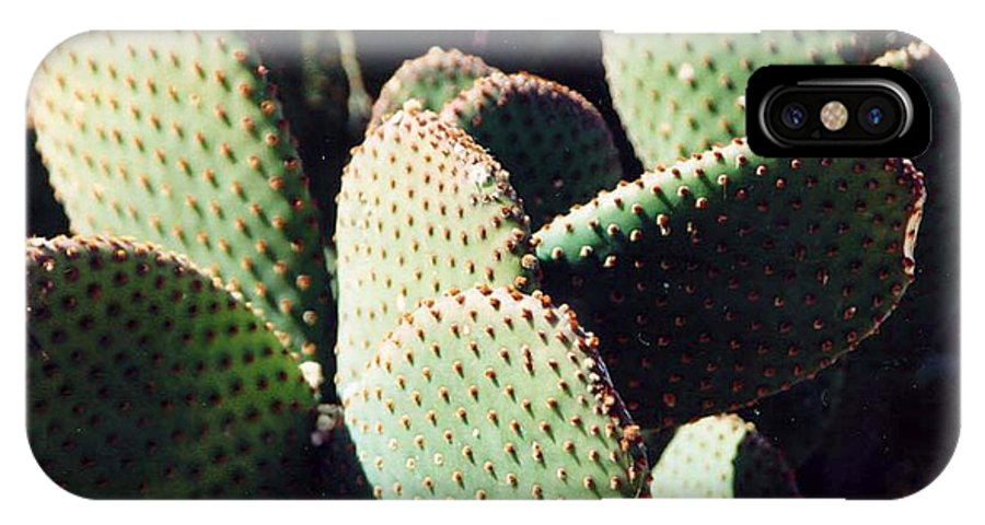 Field IPhone Case featuring the photograph Cactus by Margaret Fortunato