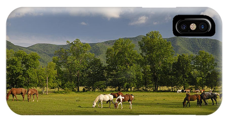Cades Cove IPhone X Case featuring the photograph Cades Cove Horses In Smoky Mountains Tennessee Usa by Darrell Young