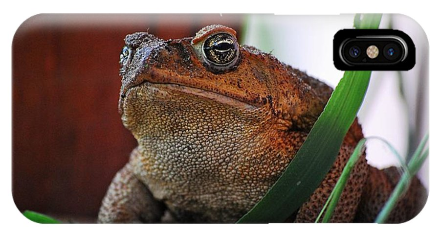 Cain Toad IPhone X / XS Case featuring the photograph Cain Toad by Robert Meanor