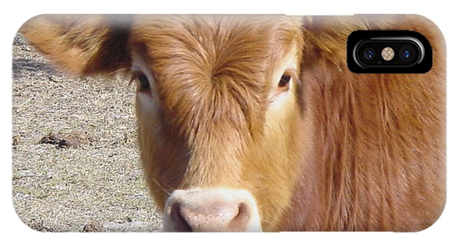 Farm IPhone X Case featuring the painting Calf Smiles by Debbie May