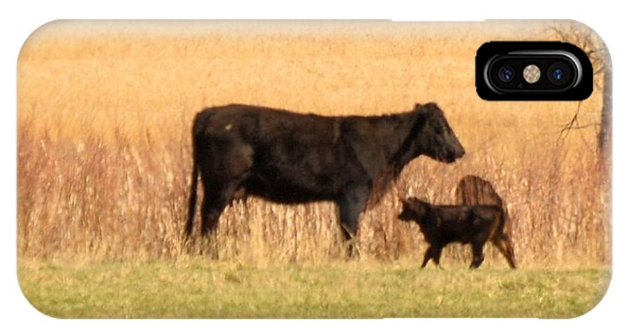 Cow IPhone X Case featuring the photograph Calf by Wendy Fox