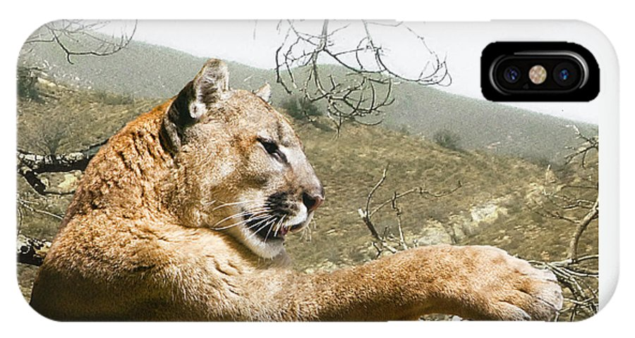 Cougar IPhone X Case featuring the photograph California Cougar by Lynn Andrews