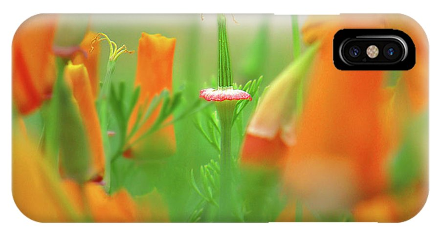 California Poppies IPhone X Case featuring the mixed media California Poppies by Aubri Johneen