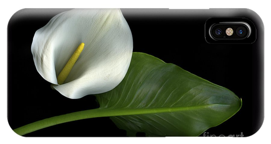 Scanography IPhone X Case featuring the photograph Calla Lily by Christian Slanec