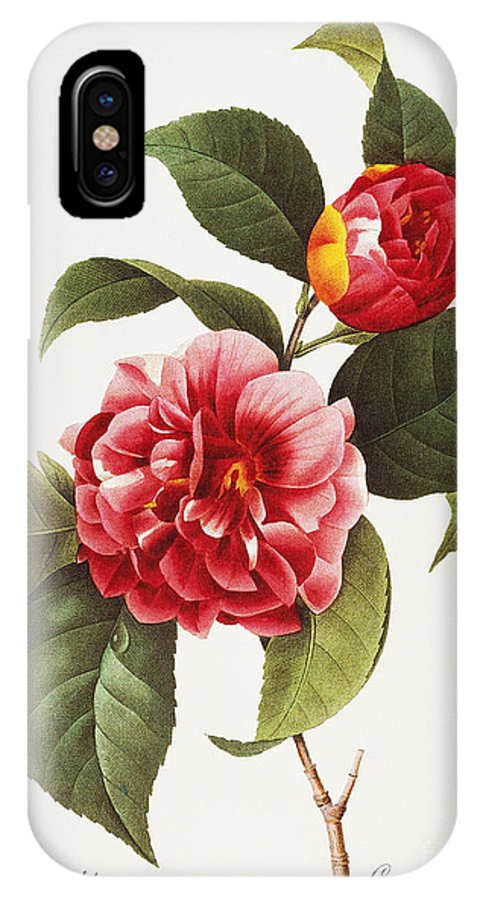 1833 IPhone X Case featuring the photograph Camellia, 1833 by Granger