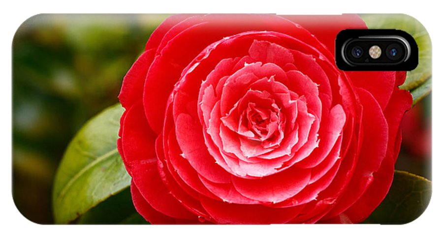 Azores IPhone Case featuring the photograph Camellia Japonica by Gaspar Avila