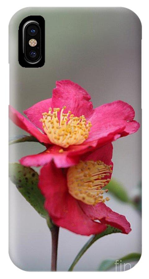 Camellia Sasanqua Yuletide IPhone X / XS Case featuring the photograph Camellia Sasanqua Yuletide 1 by Marta Robin Gaughen