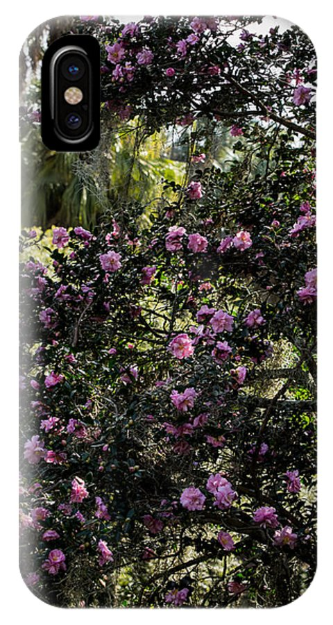 Camellia IPhone X Case featuring the photograph Camellia Tree by Zina Stromberg
